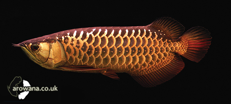 chises nude whores photos